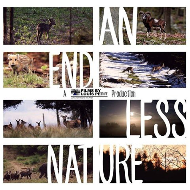 Sortie de mon nouveau film prévue fin de cette semaine sur ma page www.facebook.com/louispetitfilms ! #wild #outside #movie #shortfilm #production #nature #seasons #beauty #freedom #adventure #aftermovie #thanks #likes #filmsbylouispetit #picoftheday #bestoftheday #instacool #swag #instagood #awesome #viral #buzz #followme #style #tagsforlikes #bright #colors #landscape #light #cool